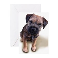 Border Terrier Boy Greeting Cards (Pk of 20)