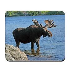 Moose Mousepad