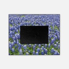 Bluebonnets Picture Frame