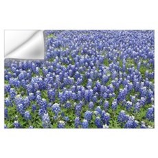 Bluebonnets Wall Decal