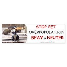 Spay & Neuter Bumper Bumper Sticker