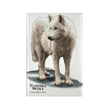 Tundra Wolf Rectangle Magnet