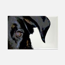 Beauceron Graphic Magnets