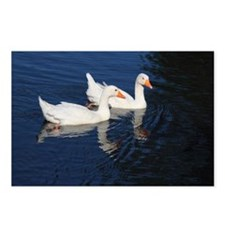 Two Emden Geese Postcards (Package of 8)