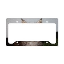 Cute Maine coon cat License Plate Holder