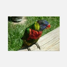 Colorful Lorikeet Rectangle Magnet