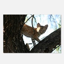 Bobcat Pause and Look Postcards (Package of 8)