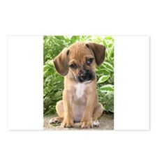 Puggle Postcards (Package of 8)