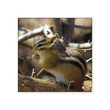 Chipmunk Eating Sticker