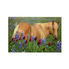 Palomino and Bluebonnets Rectangle Magnet (10 pack