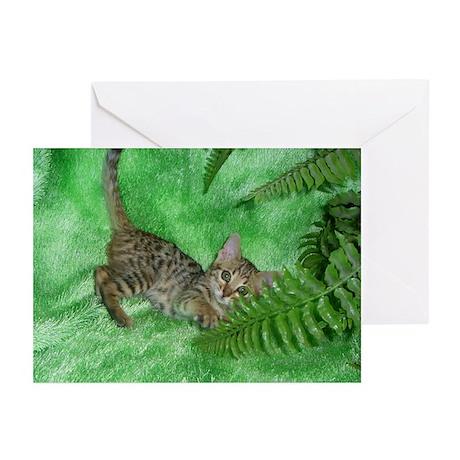Bengal Kitten Greeting Cards (Pk of 10)