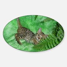 Bengal Kitten Oval Decal