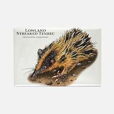 Lowland Streaked Tenrec Rectangle Magnet