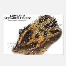 Lowland Streaked Tenrec Postcards (Package of 8)