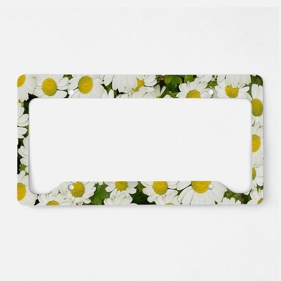 white daises License Plate Holder