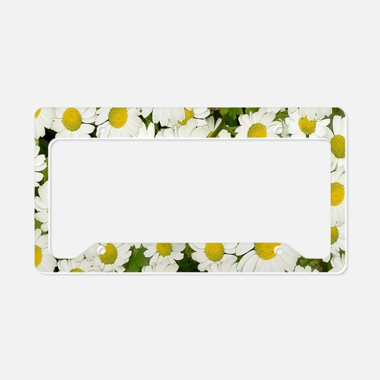 white daises License Plate Holder