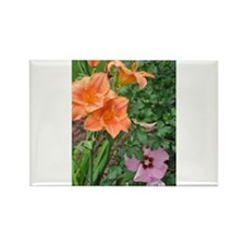 Lilys_Rose of Sharon Magnets