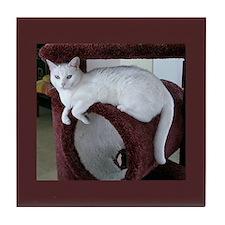 TURKISH VAN CAT Tile Coaster