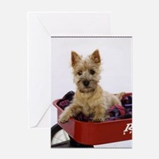 Baby Cairn Terrier Greeting Card