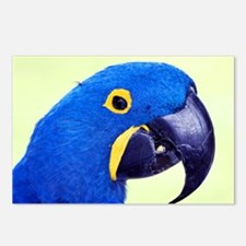Blue Macaw Postcards (Package of 8)