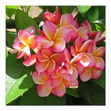 "Hawaiian Plumeria Square Car Magnet 3"" x 3"""