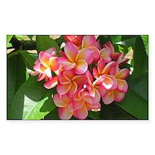 Hawaiian Plumeria Decal