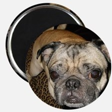 Another Pug Magnet
