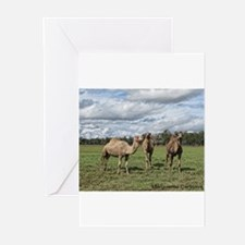 Camels in the field Greeting Cards
