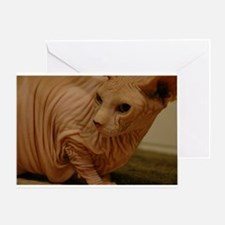 Wrinkled cat Greeting Card