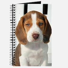 Baby Beagle Journal