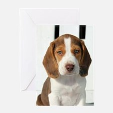 Baby Beagle Greeting Cards
