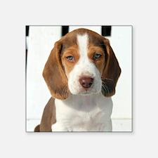 Baby Beagle Sticker