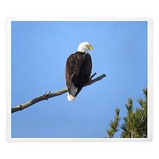 Bald Eagle King Duvet