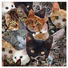 Kitty Collage Poster