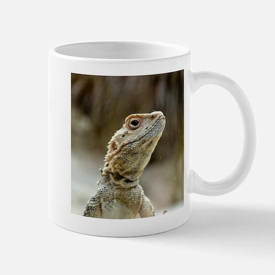 nosy Lizard Mugs