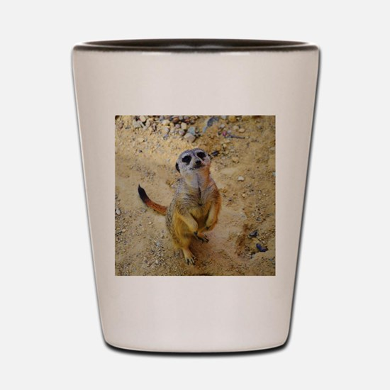 lovely meerkat 515P Shot Glass