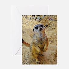 lovely meerkat 515P Greeting Cards
