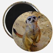 lovely meerkat 515P Magnets
