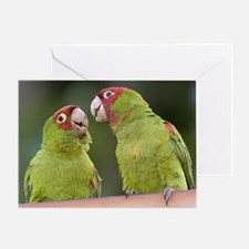 """Gossip"" Greeting Card"