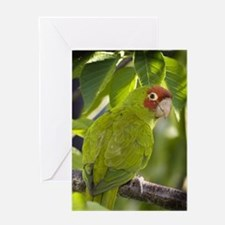 """Over the Shoulder"" Greeting Card"