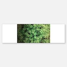 Marajuana Weed Pot Bumper Bumper Bumper Sticker