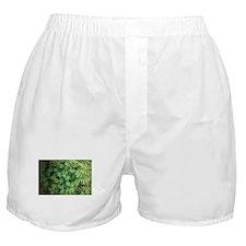 Marajuana Weed Pot Boxer Shorts