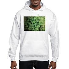 Marajuana Weed Pot Jumper Hoody