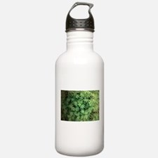 Marajuana Weed Pot Sports Water Bottle