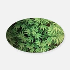 Marajuana Weed Pot Oval Car Magnet