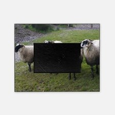 Cute Sheep Picture Frame