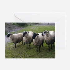 Unique Sheep Greeting Card