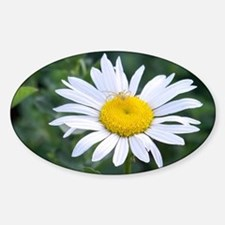 Spider on Daisy Sticker (Oval)