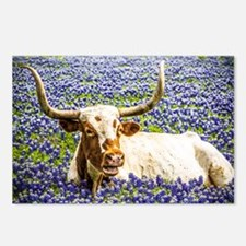 Cute Texas longhorns Postcards (Package of 8)