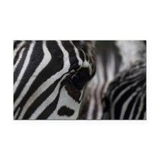 Zebra Eye Rectangle Car Magnet